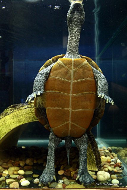 Darwin's Turtle