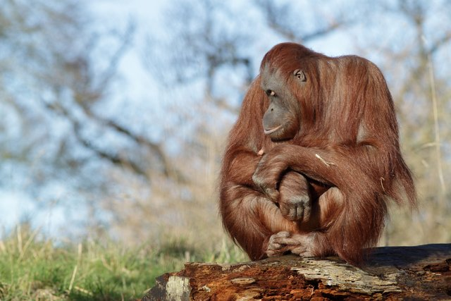Animal Photography Tips
