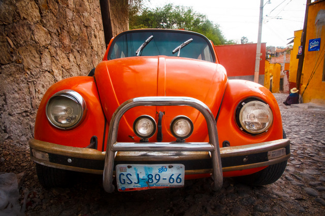 The Beetles of San Miguel de Allende