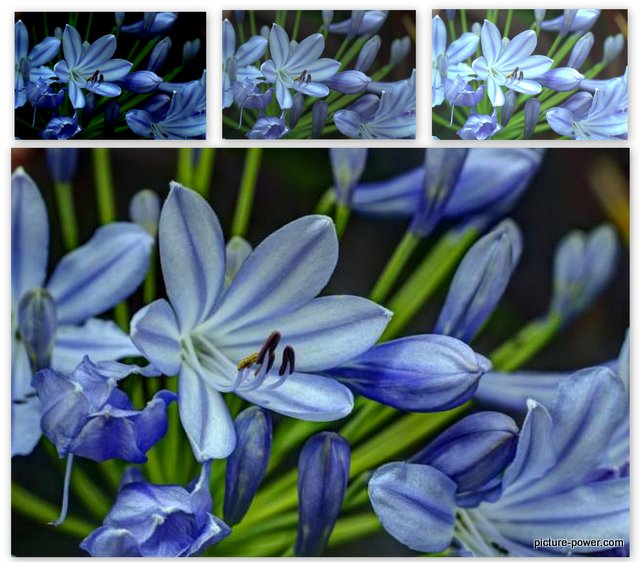 Digital Photography Terms - Underexposed | HDR Flowers