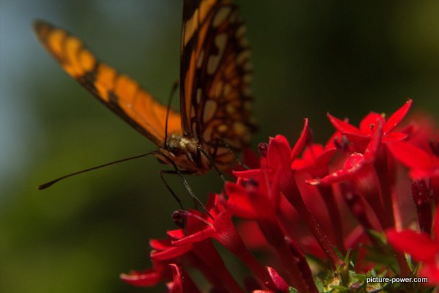 Digital Photography Terms - Depth of Field | Butterfly with Bokeh