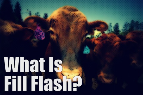 What is fill flash?