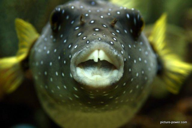 Weird Photos - The Fish Was Biting