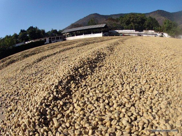 GoPro Hero Photography Tips | Coffee Plantation Antigua, Guatemala