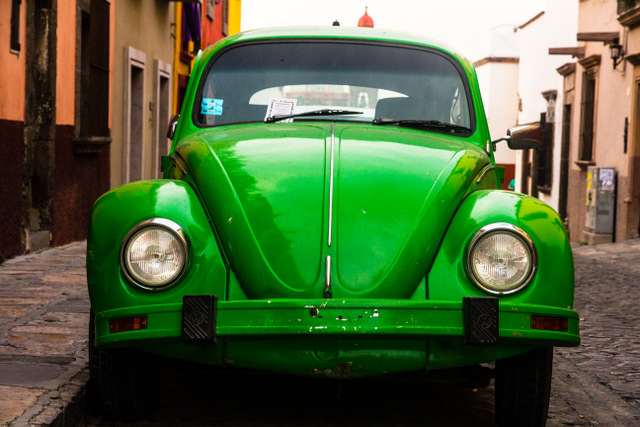 The Beetles of San Miguel de Allende | An Ongoing Picture Power Project
