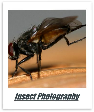 How To Photography Insects