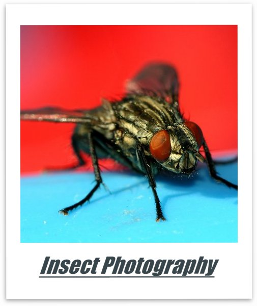 Insect Photography Lenses and Accessories