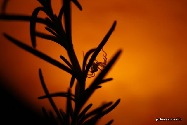 Weird photos of animals   Itsy Bitsy Spider
