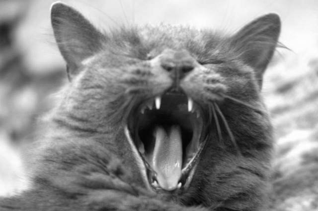 Weird photos of animals | Yawning cat