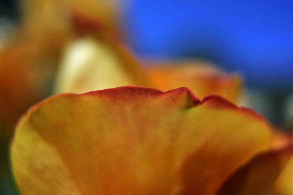 Sigma 20mm f/1.8 EX DG Lens Review