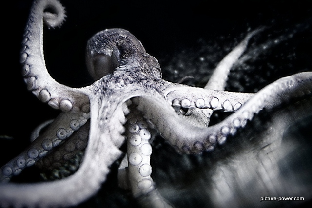 Octopus on glass.