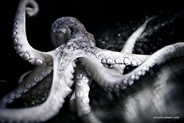 Octopus on glass.