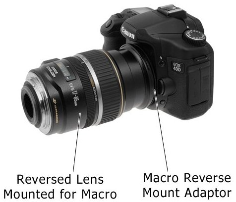 Insect photography tips it 39 s all in the lens - Best lens for interior design photography ...
