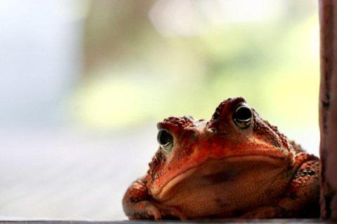 Frog at my door.