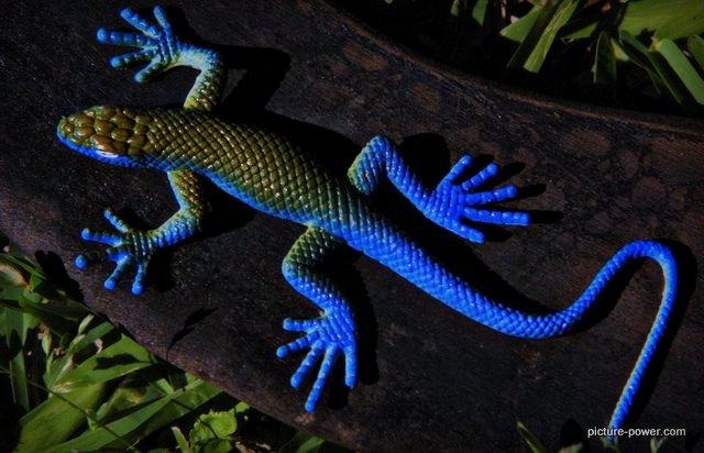 Weird photos of animals | Gecko Toy