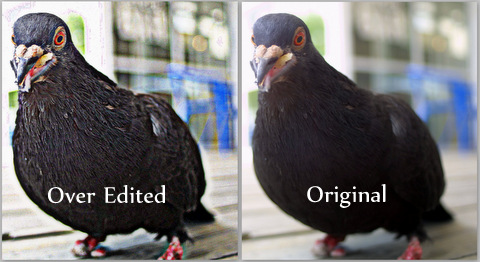 Digital Photography Terms - Noise | Over-editing can create fantastic results. Edit with caution, purpose and care.