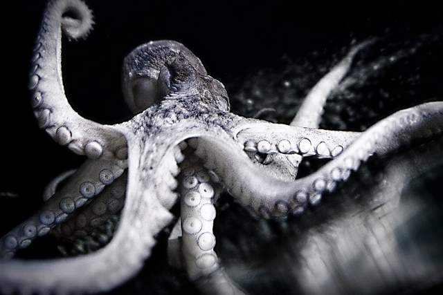 Low Light Digital Photography | Octopus