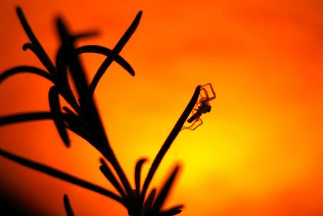 Canon EOS 30D | Spider Silhouette